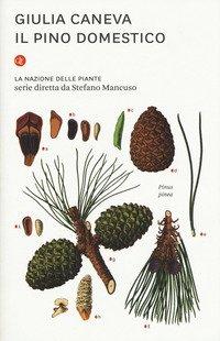 Il pino domestico. La nazione delle piante